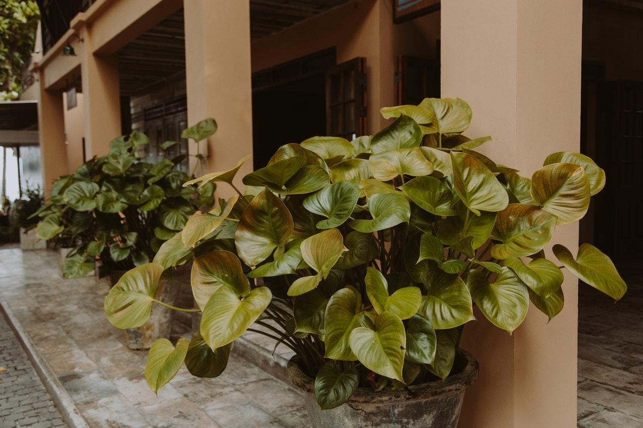 Rośliny kolekcjonerskie