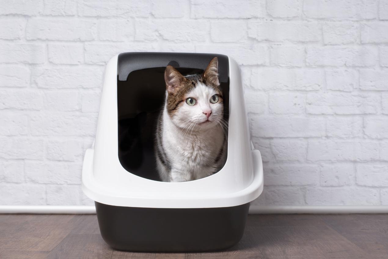 Odpowiednia kuweta dla kota, czyli jaka?